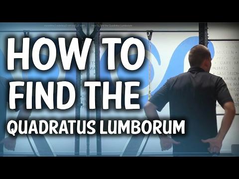 How to Find the Quadratus Lumborum