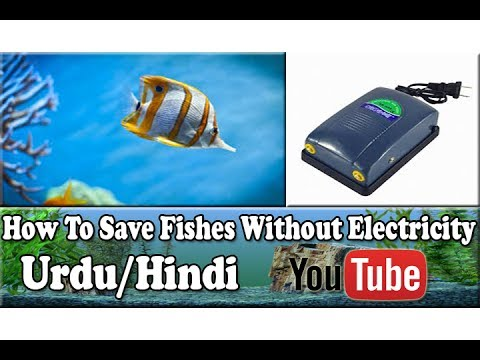 How To Save Fishes Without Electricity | Urdu/Hindi