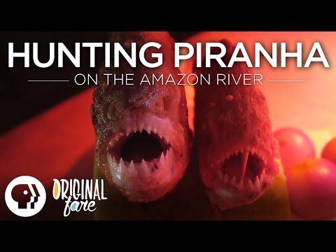 Hunting Piranha on the Amazon