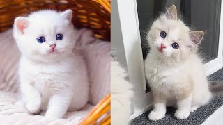 Baby Cats - Cute and Funny Cat Videos Compilation #34 | Aww Animals