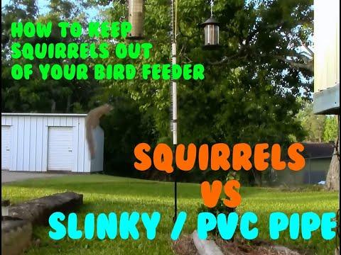 Squirrels vs PVC pipe / Slinky Combo