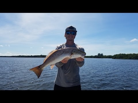 Sight fishing Big Redfish in Tampa Bay!