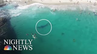Stunning Video Of California Swimmers' Whale Encounter | NBC Nightly News