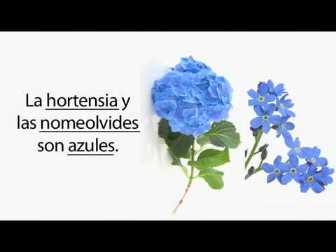 Learn Spanish 4.10 - Flowers, Accents & Tildes