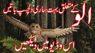 Interesting Information about Owl (ullu) | Elite Info | Report by NAZAR USMAN