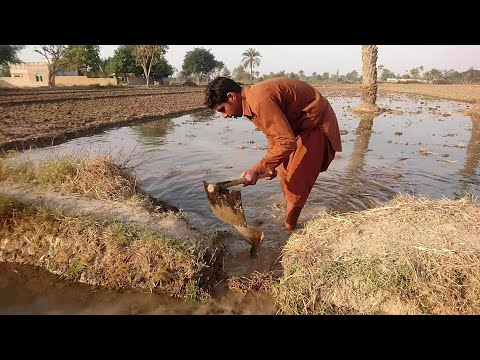 Agriculture Farms Pakistani Punjab Village Life Full Episode