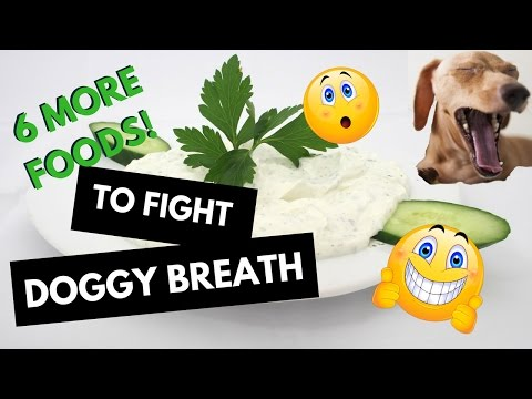 6 MORE Foods to Fight Doggy Breath