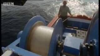 Giant Blue-Finned Tuna - Killer Whale -  BBC Animals