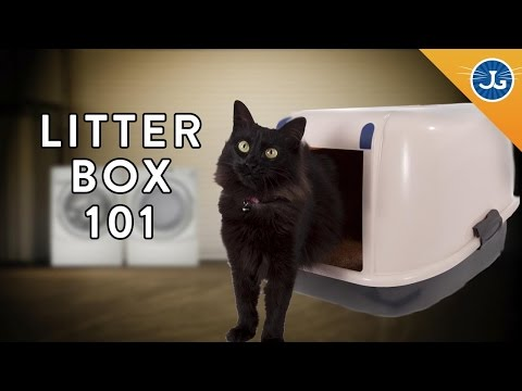 You're Setting Up Your Litter Box All Wrong!