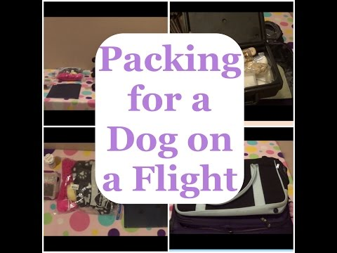 Packing for a Dog on a Plane