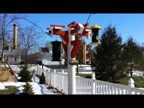 Bird feeder PVC pole