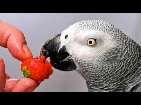 Which Birds Talk the Best? | Pet Bird