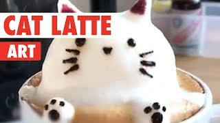Cat Latte Art   Coffee and Kittens!