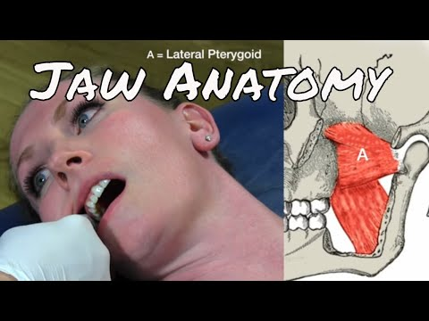 9 Muscles of the Head and Jaw - Motion Specific Release