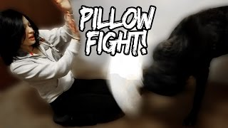 Wolfdog Pillow Fight!