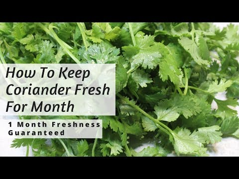 How To Keep Coriander Fresh For Long in Fridge -Cilantro Saving Tip By Madeeha