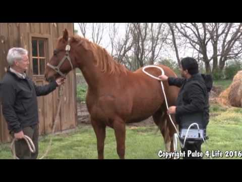 Pulse 4 Life for Equine Use