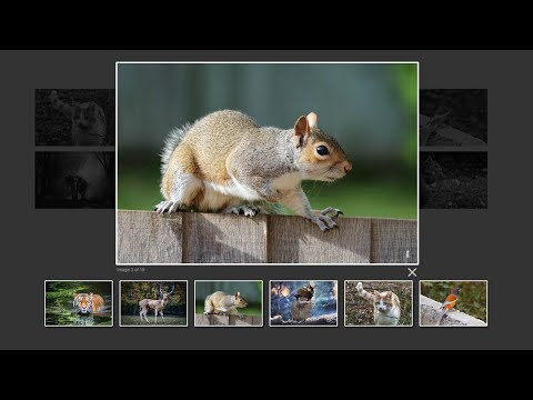 How To Create Image Gallery In HTML, CSS and Javascript | Lightbox Gallery