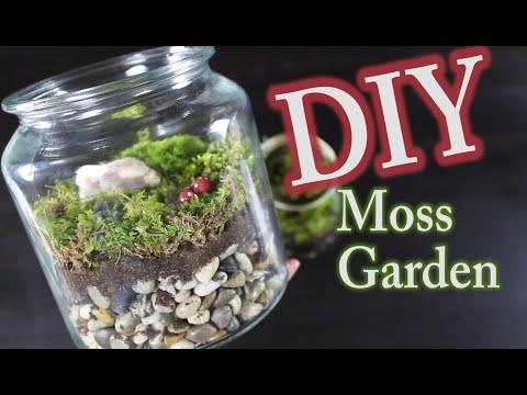 DIY Moss Terrarium:  How To Make A Moss Garden