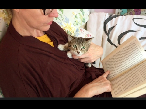Dormouse Part 2 - How to Tame a scared cat or kitten