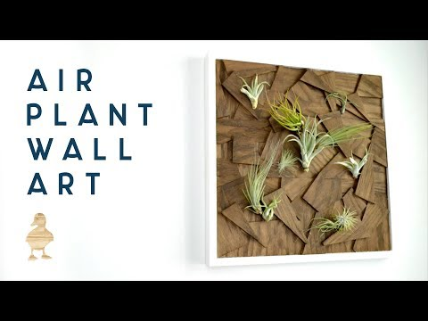DIY Air Plant Wall Art from Scrap Wood | woodworking how to