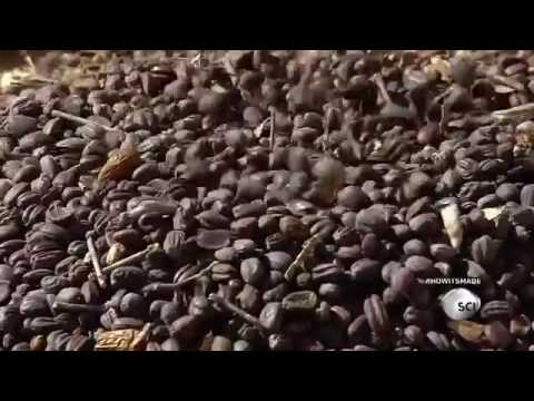 How It's Made  Jojoba Oil