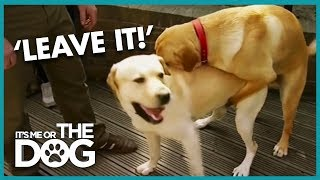 How To Stop Your Dog Humping