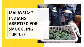 Malaysia seizes thousands of smuggled turtles at airport