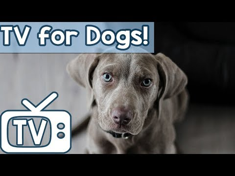 Calming Videos for Dogs to Watch! Cows, Sheep and Horse Relaxation to Soothe Dogs!