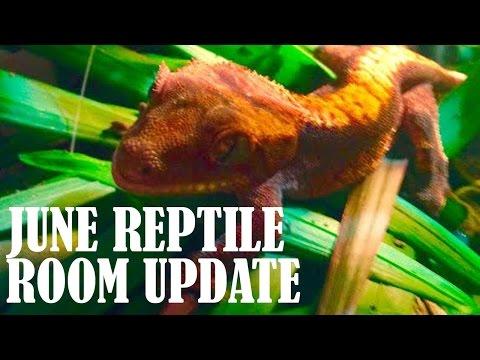 June Reptile Room Update