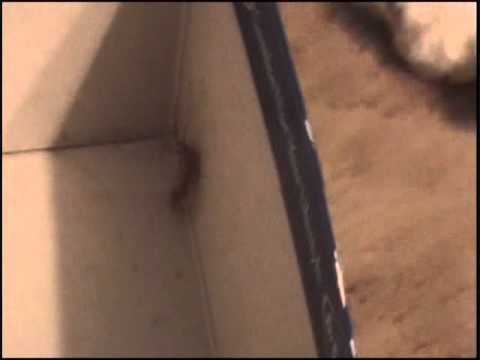 The house centipede rescue
