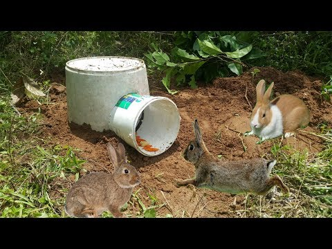 How To Catch Wild Rabbit Use Plastic Basket-Amazing Quick Rabbit Trap Using Deep Hole Buckets