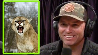 Guess What Mountain Lion Tastes Like? - Joe Rogan and Adam Greentree
