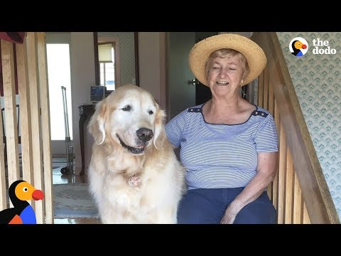 Senior Dog Always Visits His Favorite Neighbor - CHEDDAR | The Dodo