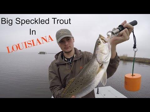 Big Speckled Trout in Louisiana-Cameron,LA