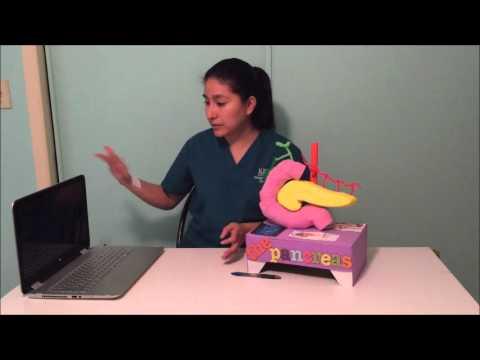 Pancreas Project Video