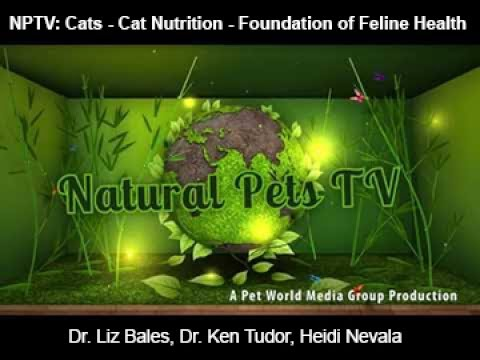 Natural Pets TV: Cats - Episode 5 - Cat Nutrition - The Foundation of Feline Health