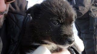 Husky Dog Sledding In Svalbard - Earth Unplugged