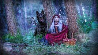 Wolfdog Enchanted Forest Photoshoot