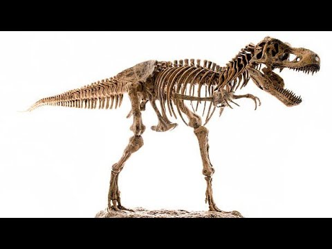 How to make dinosaur skeleton with paper