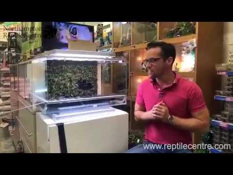 Biopod Terra Terrascape Live Stream