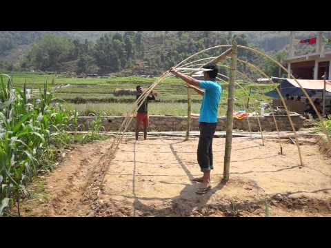 Bamboo shelter (bass)