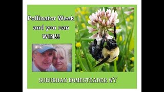 Pollinator Week and You can WIN!!!