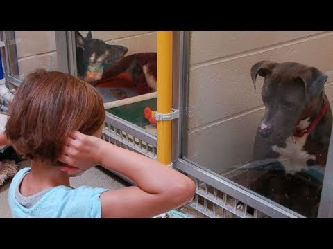 These Shelter Dogs Were Frightened Of Humans, But Now Kids Are Helping Them In The Most Awesome Way
