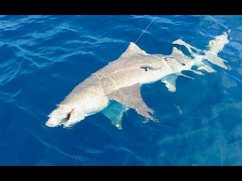 FLORIDA OCEAN FISHING TRIP | WE CAUGHT A SHARK!!!