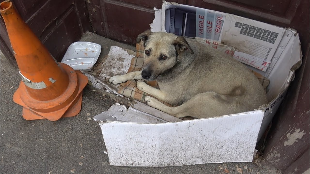 Dog Spent Entire Life On The Street Until A Tourist Spotted Her