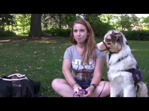 Minerva the Service Dog