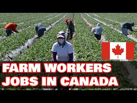 Real Jobs In Canada For Farm Workers Farmers