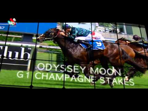 All Aged Stakes Day LIVE on Sky Racing
