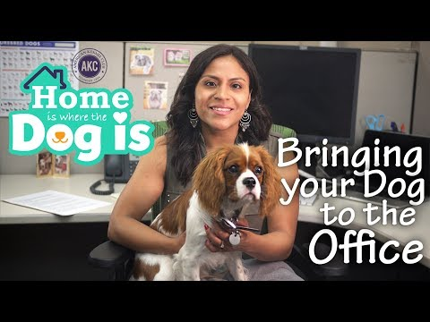 Episode 7 - Bringing your Dog to the Office